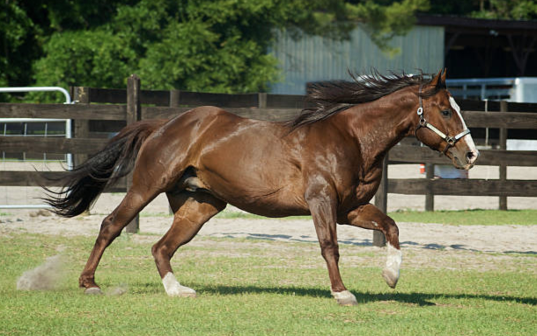 Story mit pferd Storing medical